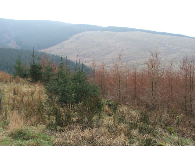 Forestry on  south Kintyre.