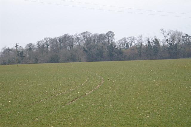 Field Near Temple Cloud