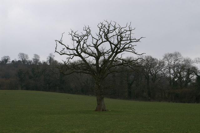White Hill Field