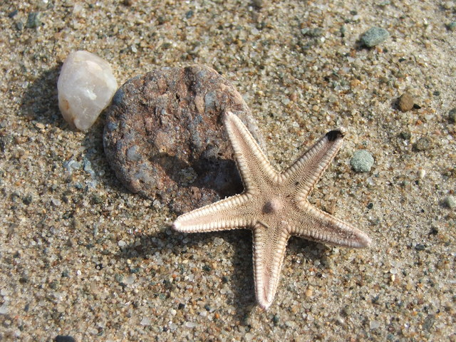 Starfish on the beach at Carradale Bay.