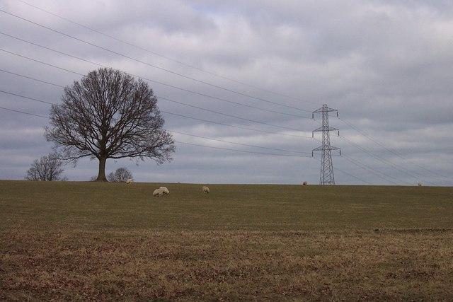 Field near Goosemoor Green