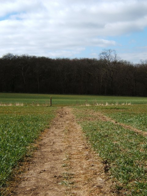 View Towards Crabtree Wood