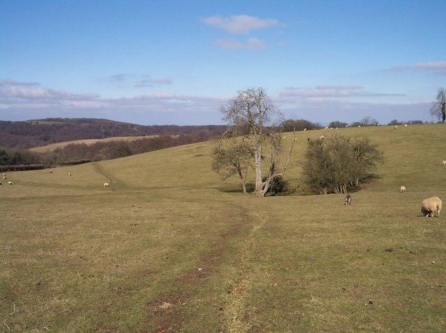 Spring in Ebworth Pasture