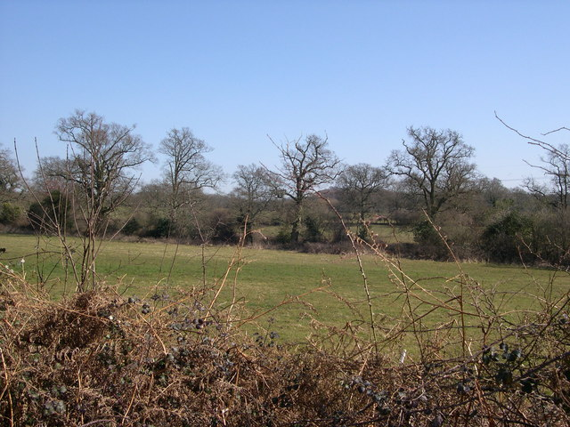 Copse, North Boarhunt