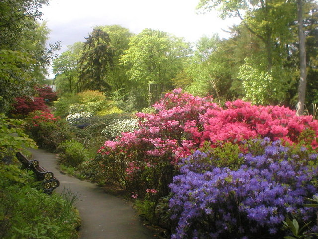 Rhododendrons at Johnston Gardens