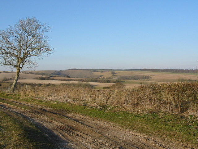 Farmland near Tollard Royal Dorset
