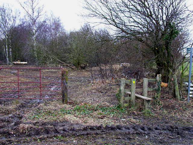 Derelict woodland, near Marnforth Farm