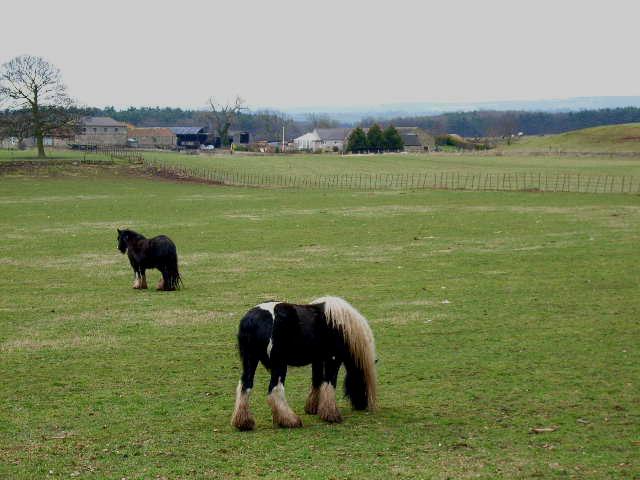 Home Farm, Hornby