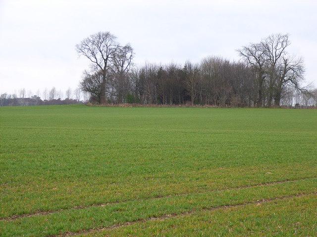 Roundhill Plump, near Hackforth