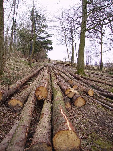 Wegber Plantation