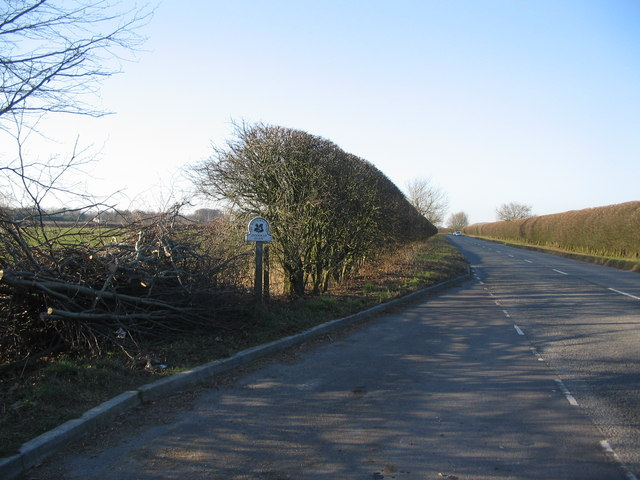Hedge near Stourhead