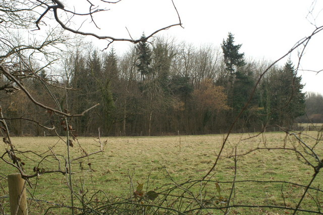 Forestry plantation, Ladwell