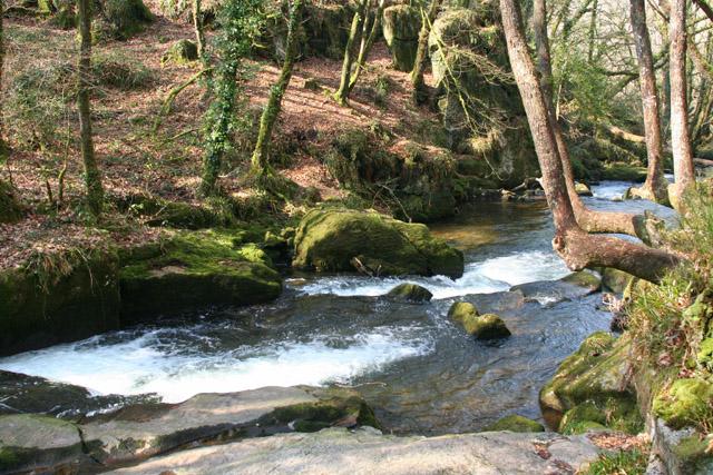 St Neot: Golitha Falls