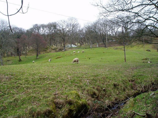Hillside grazing near Bala Lake