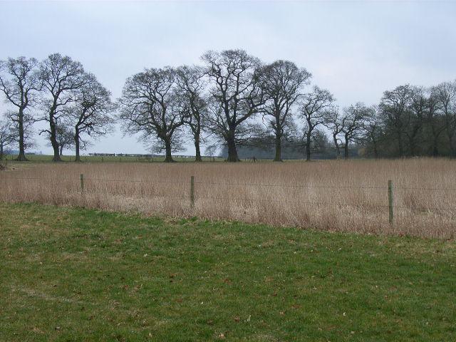 Near Stokefield Farm