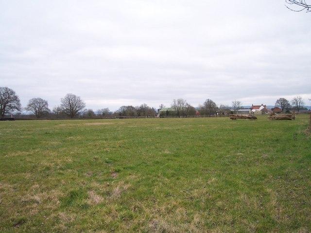 Natural Horse Jumps, Northwood Green