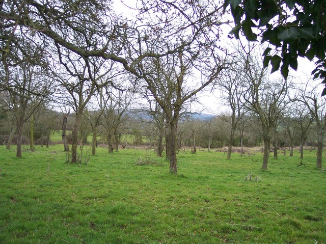 Orchard, Boseley