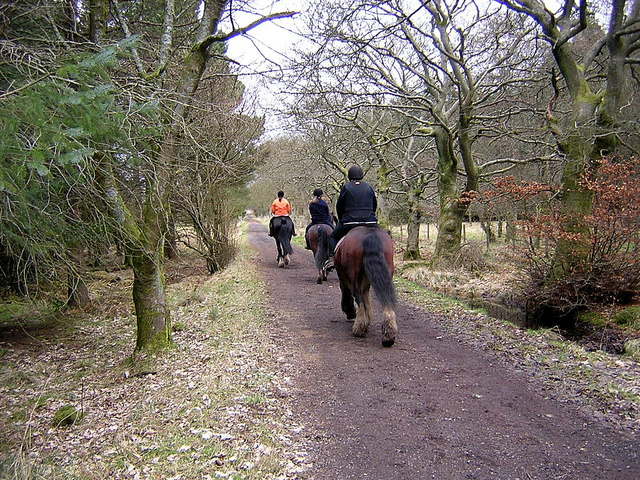 Horse Riding in Palacerigg Country Park