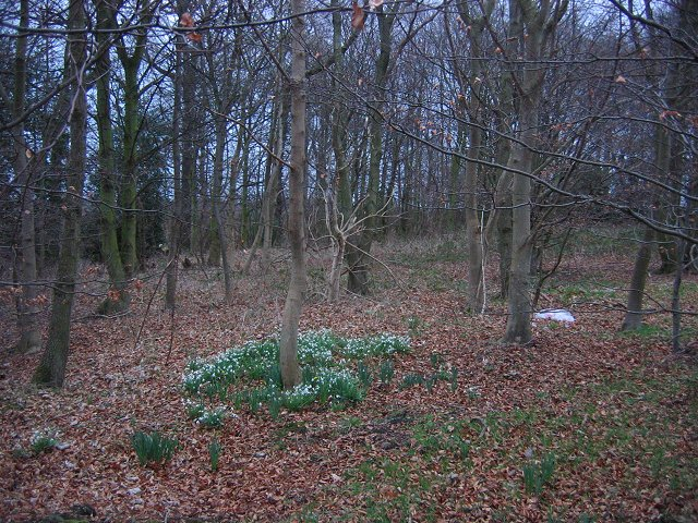 Woodland, East Fortune