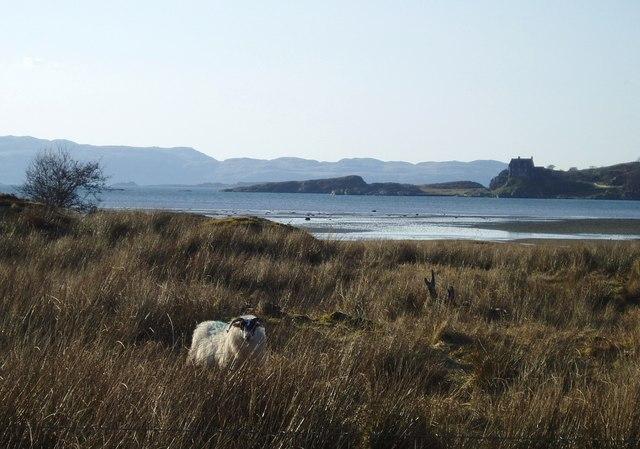 Rough grazing beside Loch Crinan