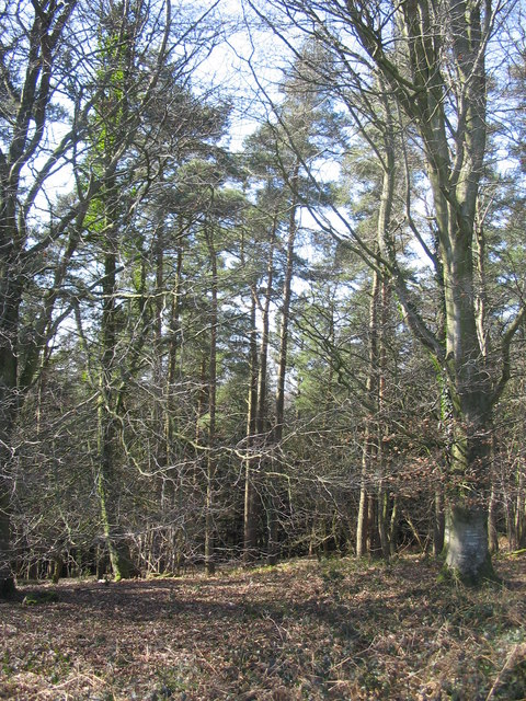 Yarnfield Common Wood