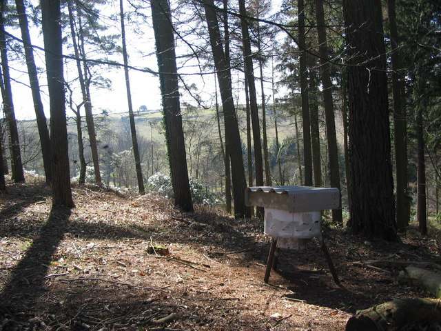 Yarnfield Common Wood