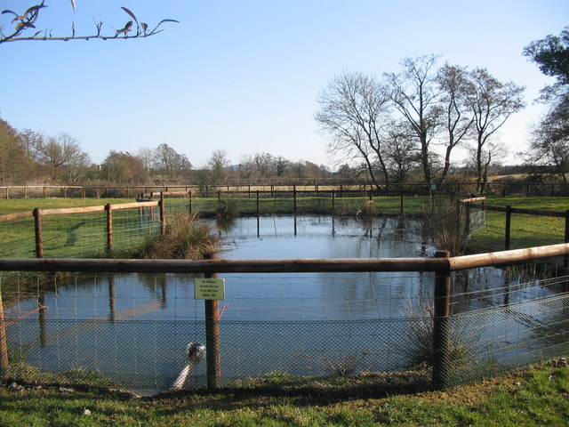 Pond at Milton Farm