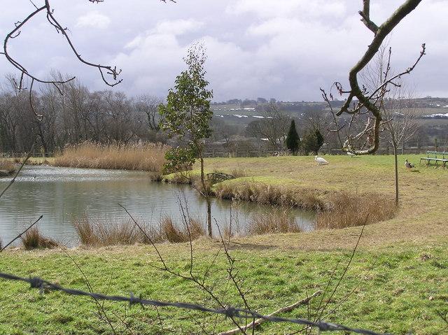 Pond : Ravensworth Nurseries.