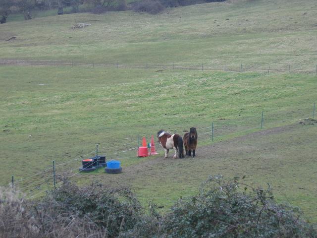 Ponies near Morton Underhill