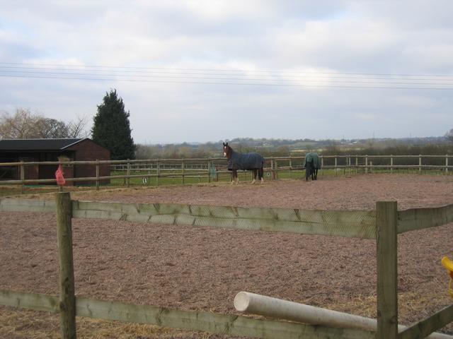 Horses at Knowl Fields Barn Farm