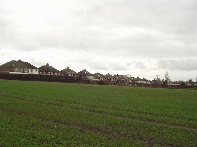 Field near Scholes