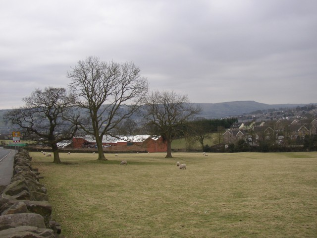Line of trees off Bolton Road, Silsden