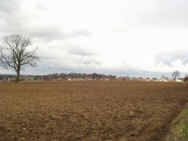 Field by Ellerker Lane, Thorner