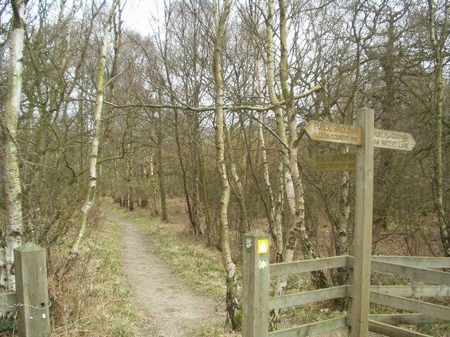 Saw Wood, Leeds Country Way