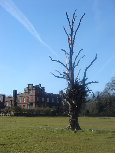 Dead tree at Cuerden Hall
