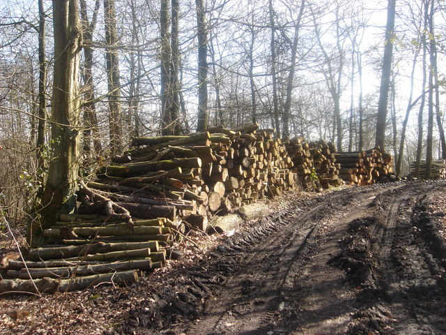 Forestry work at Cuerden Hall