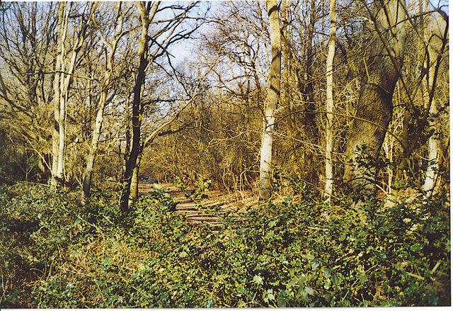 Walnut Tree Bottom, Merrow Downs.