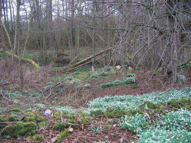 Inch Wood.