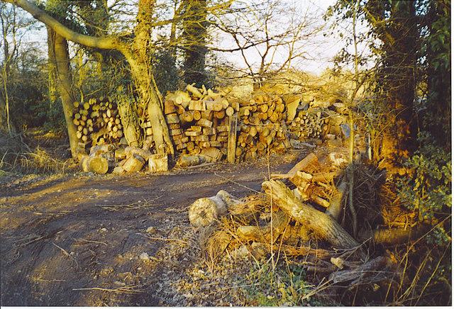Logging at Lyne House.