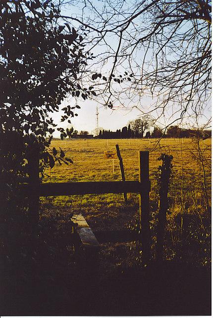 Wealden Fieldscape, west of Gages Farms.