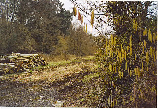 Woodpile near Polsted Manor.