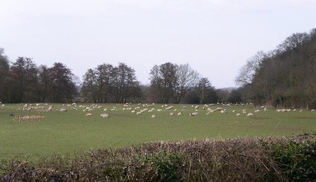 Severn flood plain beneath Hawford Wood