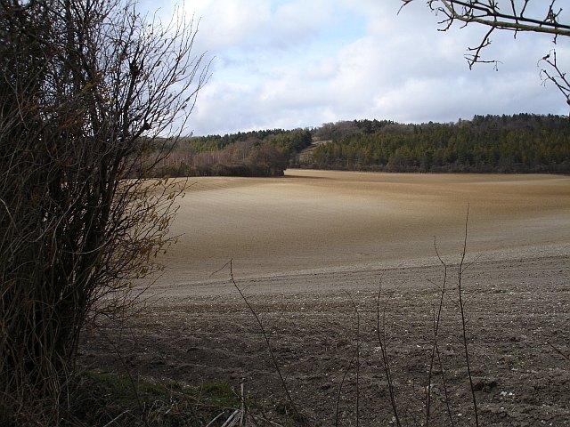 Salisbury Wood