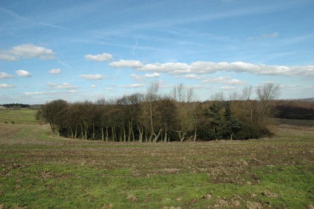 Copse near Wombwell Wood