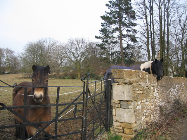 Paddock near South Wraxall House