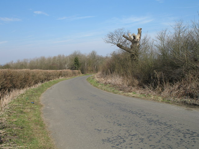 Dead Tree on West End Lane