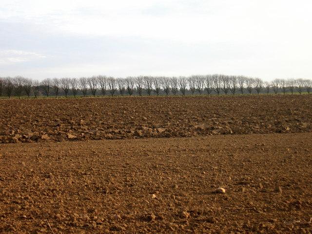 Ploughed Field at Kirklandhill Farm, near East Linton