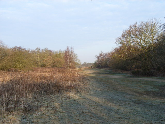 The heath above Hartley Wintney