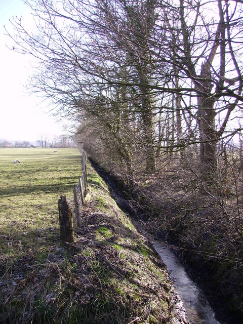 Ditch and Woodland