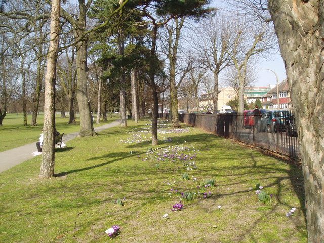 Trees and crocuses in Avery Hill Park, Eltham, Kent